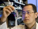 Японские ученые создадут человеческую почку